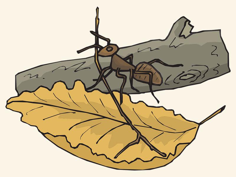 قایق مورچه - اسدالله شعبانی