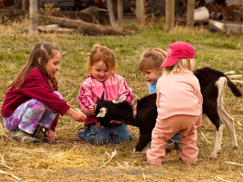 مزرعه محیط مناسبی برای تقویت سیستم ایمنی بدن کودکان است