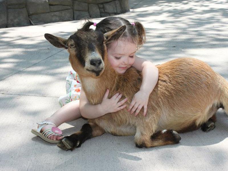 تفکر مراقبتی کودکان در قبال حیوانات