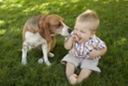 کودکان معنی واق واق سگ را می فهمند!