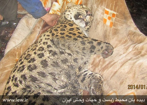 نه برای پلنگ ایرانی که برای کودکان ایرانی باید گریست!