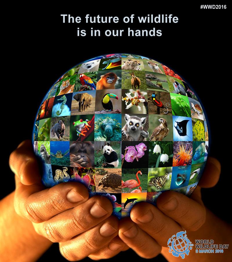 سرنوشت حیات وحش در دستان ماست