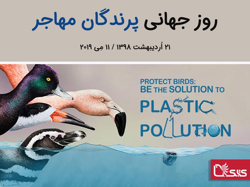 روز جهانی پرندگان مهاجر ۲۰۱۹: زبالههای پلاستیکی بلای جان پرندگان است!